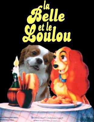 003-humour-chien-au-cavalier-king-charles