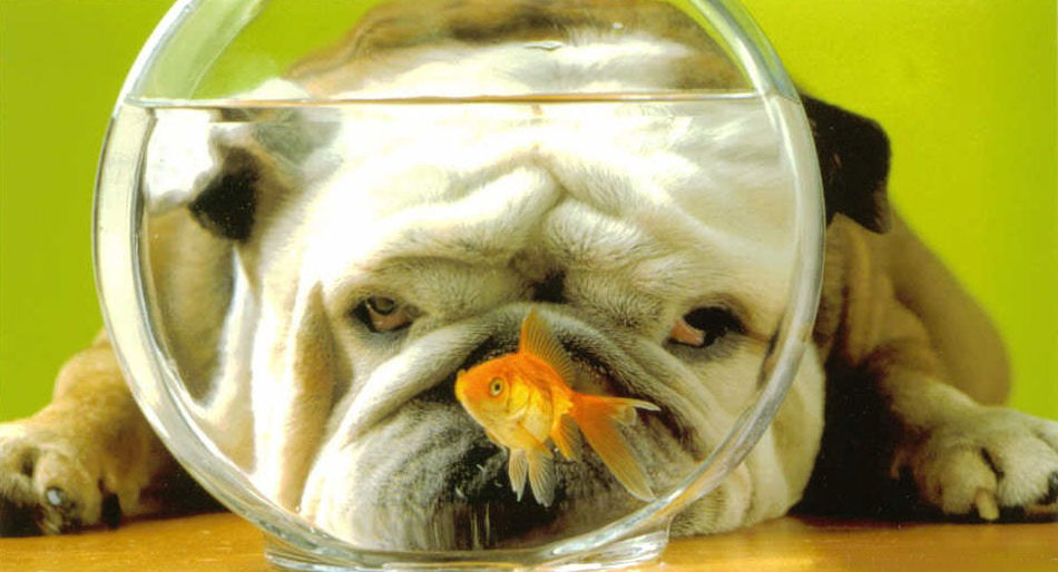 Gazette 366 Chien-poisson-rouge-humour-animal